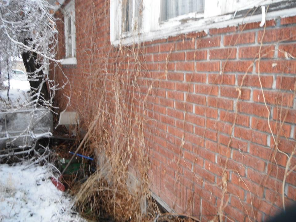 Home Inspection Overgrown Weeds Concern