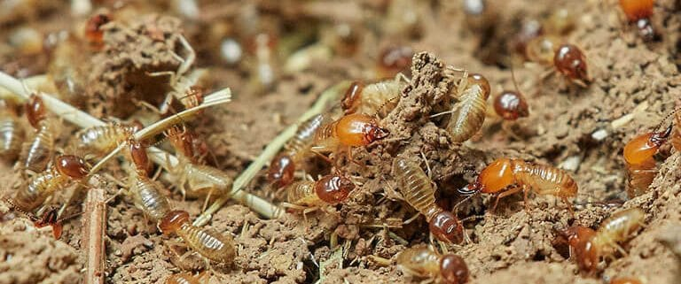 Termites Upon Inspection